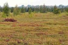 Защитные функции растительного покрова