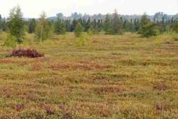 На фото показан пример растительного покрова, который защищает гидрологический режим