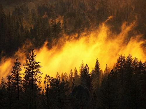 Общность и отличия между нормальными и стихийными процессами в биосфере