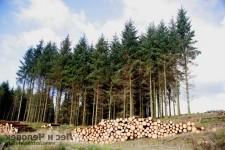Сохранение, рациональное использование и восстановление лесов