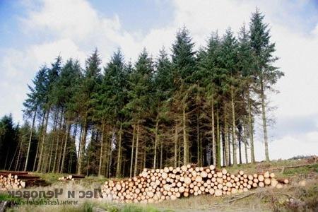 Рациональное использование лесов