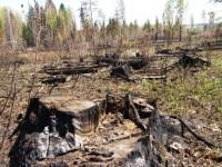 Первоочередная задача — это защита лесов, из которых делают также и ламинат