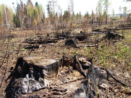 Первоочередная задача - это защита лесов