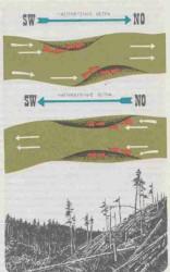 Существенная роль ветра в жизни леса