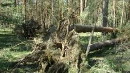 Ветровалы и буреломы: причины возникновения, сажевый фильтр и профилактические меры
