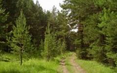 Экономические и лесоводственные факторы в лесном хозяйстве