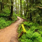 Повышение самоустойчивости лесных экосистем для производства деревянных окон
