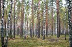 Лесохозяйственные факторы