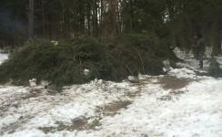 Повреждения снегом лесных хозяйств, снежные осовы и лавины