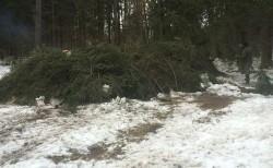 На фото показан пример повреждения снегом лесных хозяйств