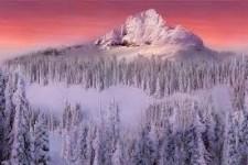 Существенная роль снега функционировании лесных экосистем