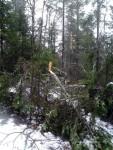 Климатические факторы, снеговалы и снеголомы
