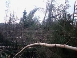 На фото изображены последствия ветровала CTR